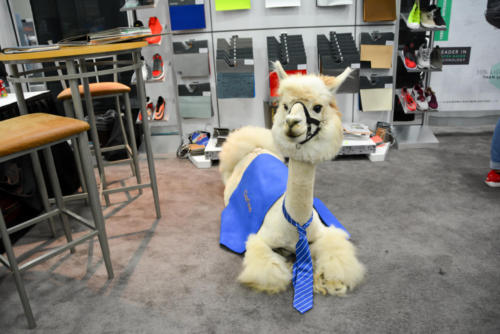 Alpaca NW Material Show August 2018-24